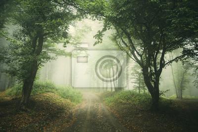 mglisty las droga tło