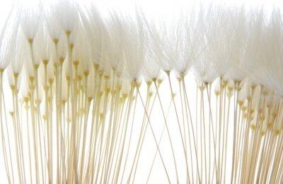Naklejka miękkie białe nasiona mniszka lekarskiego