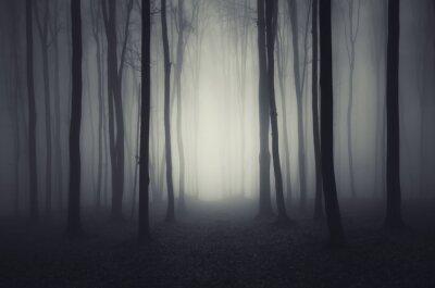 minimalne las z mgły