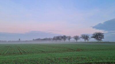 Naklejka mist in the field