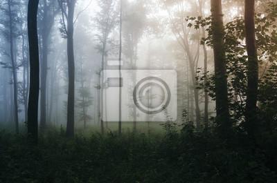 Misty naturalnych lasów fantasy tle