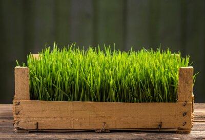 Naklejka Młode zielone kiełki