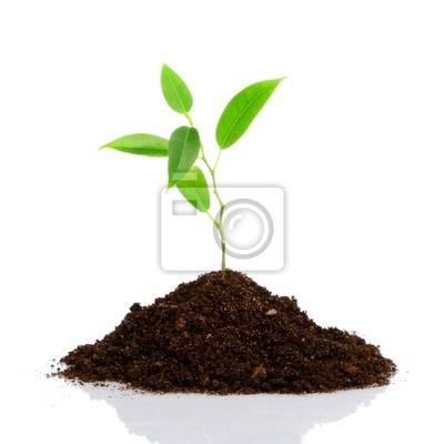 młodych roślin