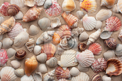 Morskie muszle na piasku