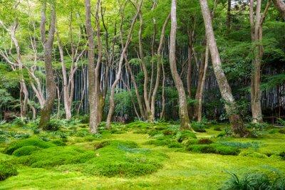 Naklejka Moss Garden View w Arashiyama, Kioto
