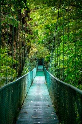 Naklejka most w lesie deszczowym