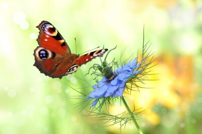 Naklejka Motyl 198
