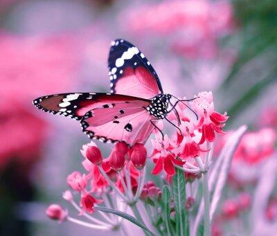 Naklejka Motyl na kwiat pomarańczy