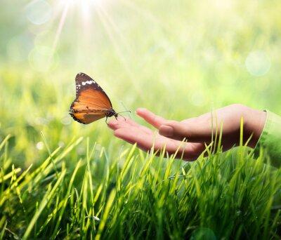 Naklejka motyl w dłoni na trawie