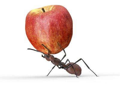 Naklejka Mrówka podnoszenia jabłko wyizolowanych na białym
