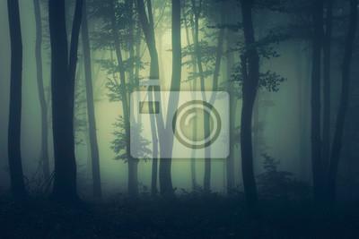 mysterious dark woods fantasy landscape