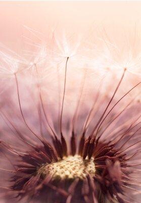 Naklejka nasion Dandelion na działanie promieni słonecznych - Streszczenie