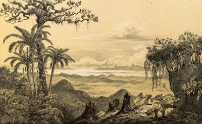 Naklejka Natura Ameryki Południowej.