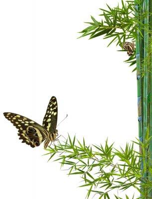 Naklejka natura détente zen koncepcja
