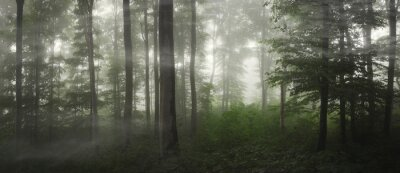 natural green forest panorama on rainy weather