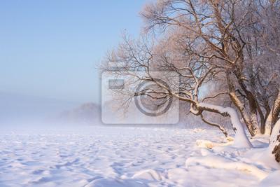 Naturalny zima krajobraz z śnieżnymi drzewami na brzeg jeziora na jasnym wieczór. Boże Narodzenie tło