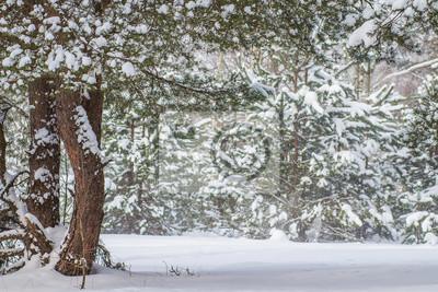 Naturalny zimowy las z śnieżnymi drzewami.