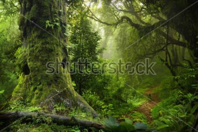 Naklejka Nepal jungle