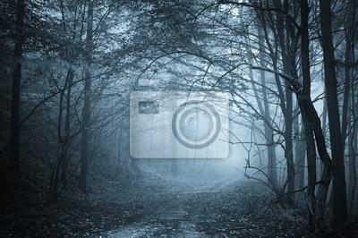 niebieskie światło w tajemniczym lesie z mgły
