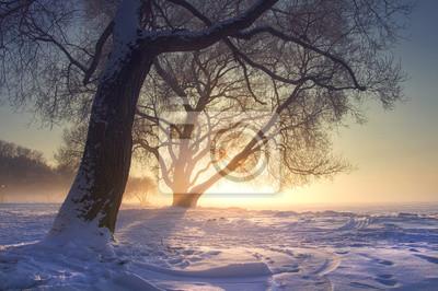 Niesamowity zimowy krajobraz w ciepłym słońcu o zachodzie słońca. Mgła i mróz. Śnieżna zimy scena w słońca świetle. Żywe promienie słońca za drzewami. Boże Narodzenie tło. Naturalna dzika zima w stycz