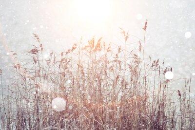 Naklejka niewyraźne tło zima, suche trawy, płatki śniegu