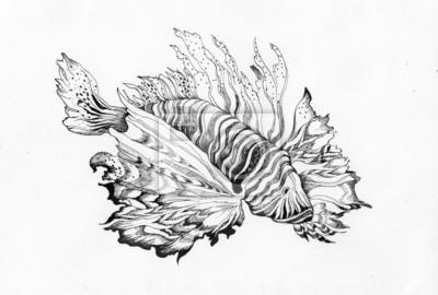Niezwykłe piękne ryby rysunek na białym tle