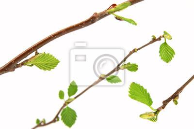 oddział wiosną z pąków