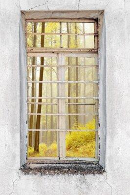 Naklejka Okna starego domu cementu z widokiem na las