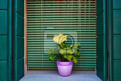 Okno z zieloną żaluzją i żółtymi kwiatami w doniczce. Włochy, Wenecja, Burano
