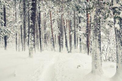 Naklejka Opad śniegu w zimowym lesie.