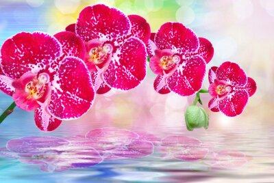 Naklejka Orchid kwiat z bliska