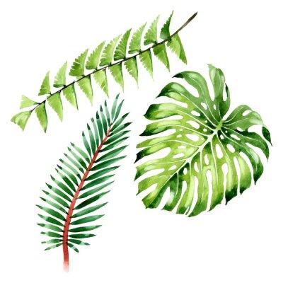 Naklejka Palm beach tree leaves jungle botanical. Watercolor background illustration set. Isolated leaf illustration element.