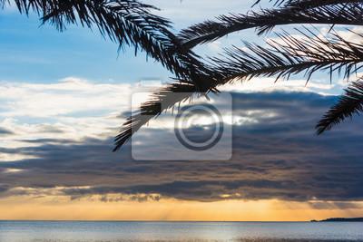 Palma rozgałęzia się sylwetkę morzem przy zmierzchem