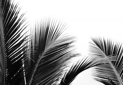 Naklejka palms leaf on white background