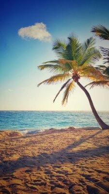 Naklejka Palmy na tropikalnej wyspie
