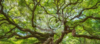 Naklejka Panorama oddziałów z Angel Oak Tree