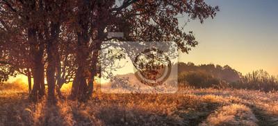 Panoramiczny krajobraz jesieni natury w jasny październik rano. Duże drzewo na złotej trawie w słońcu. Jesień natury krajobraz na wschodzie słońca.