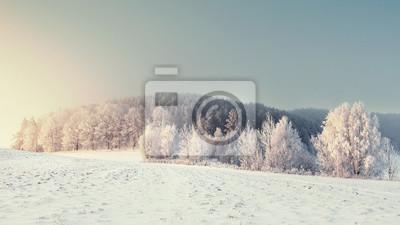Panoramiczny zimowy krajobraz. Zimowa przyroda z mroźnymi drzewami. Boże Narodzenie tło. Snowy las rano. Doskonałe drzewa zimowe z szronem.
