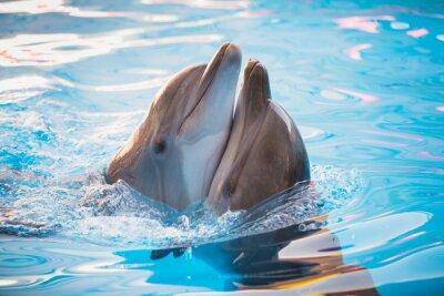 Naklejka Para delfinów taniec w wodzie
