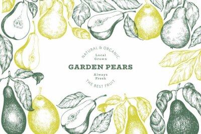 Naklejka Pear design template. Hand drawn vector garden fruit illustration. Engraved style garden retro botanical banner.