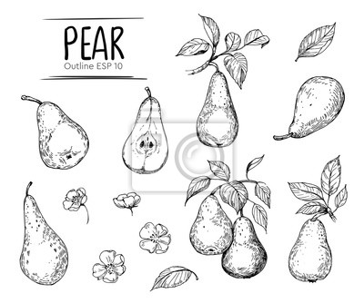 Naklejka Pear illustration. Hand drawn illustration converted to vector. Isolated. Outline with transparent background