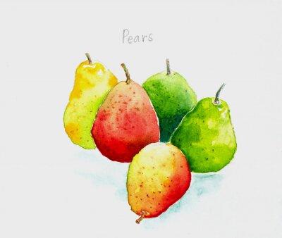 Naklejka pears'watercolor painted