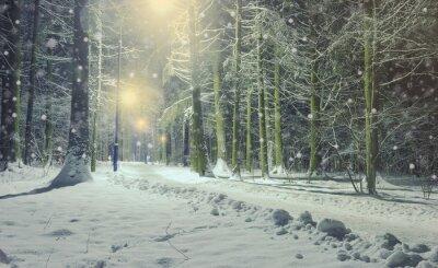 Pejzaż zimowy z mroźnej drzewo liściaste w nocy.