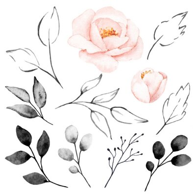 Peonies, watercolor pink flowers and gray leaves set. Floral summer vintage collection isolated on white background. Hand drawing. Perfectly for wedding, birthday, party, other greetings design.