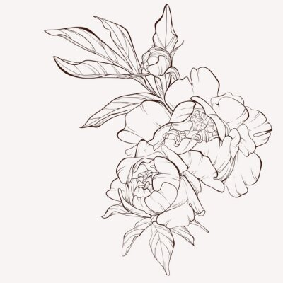 Naklejka Peony flower and leaves drawing. Vector hand drawn engraved floral card. Botanical rose, branch and berry Black ink sketch. Great for tattoo, invitations, greeting cards, decor .