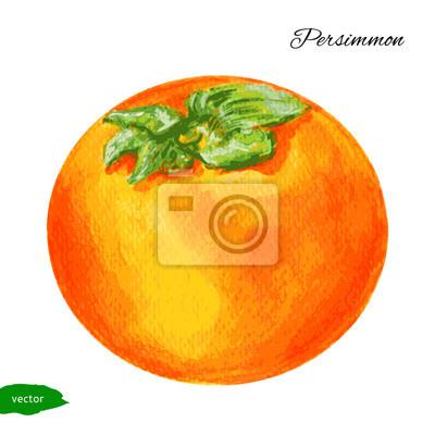 Naklejka Persimmon, akwarela ilustracji samodzielnie na białym tyłu