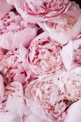 Naklejka Piękna aromatyczna świeża kwitnie oferty różowa peoni tekstura, zamyka w górę widoku