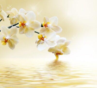 Naklejka Piękna biała orchidea