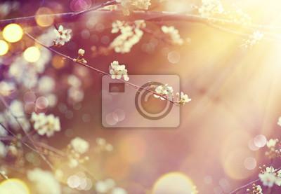 Piękna przyroda sceny z kwitnące drzewa i flary słońca