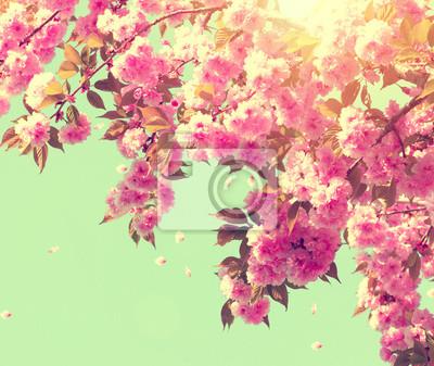 Piękna przyroda sceny z kwitnącego drzewa